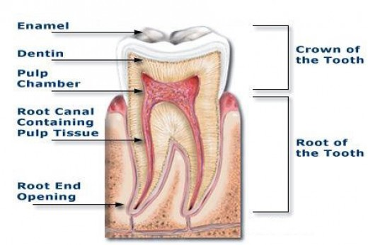 What IS A Root Canal and Why Do I Need One?