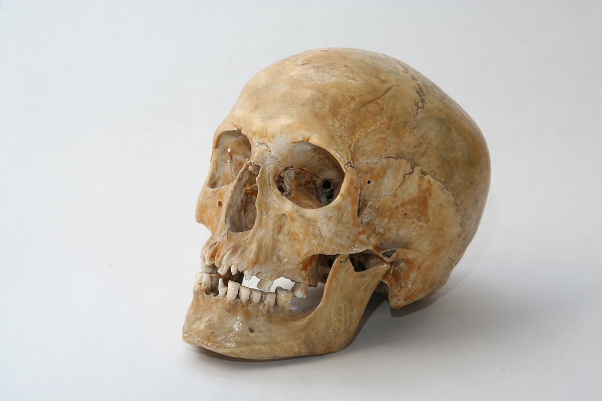 It's a real skull of human. Photo 2006.