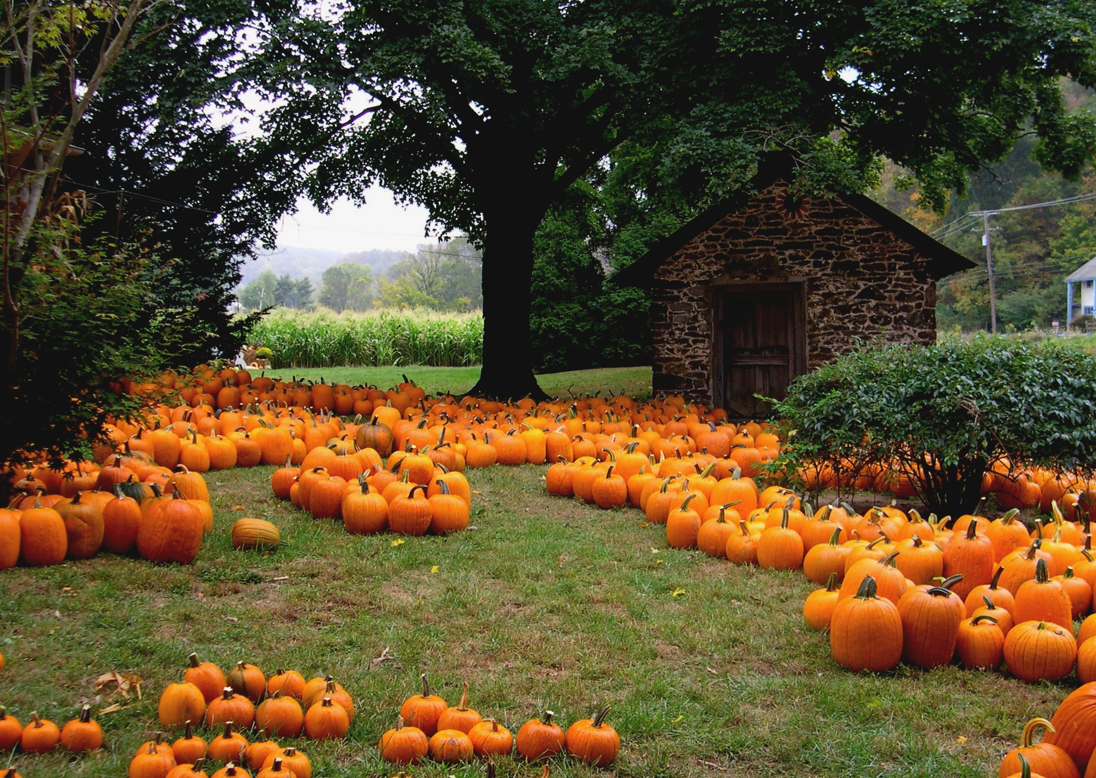 DFW Guide: The Best Pumpkin Patches